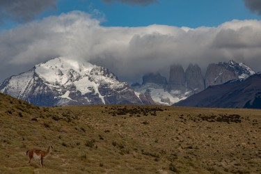 7P8A0519 Torre del Paine NP Patagonia Chile