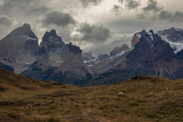 7P8A0688 Torre del Paine NP Patagonia Chile