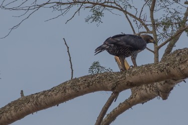 8R2A4099 ....Eagle Nsumbu NP North Zambia