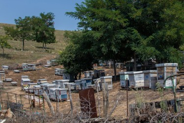 0S8A7040 Beehives Village Mariovo Region Southeast Macedonia
