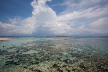 8R2A4297 Makassar Reef Flores Sea indonesia